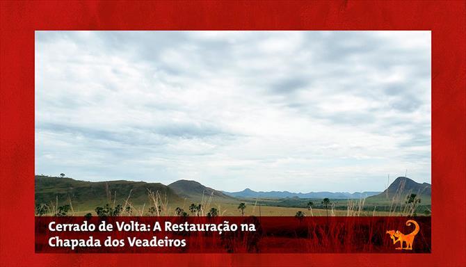 Cerrado de Volta: A Restauração na Chapada dos Veadeiros