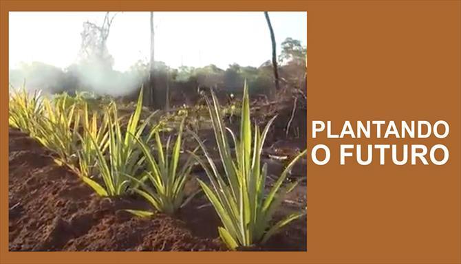 Plantando o Futuro