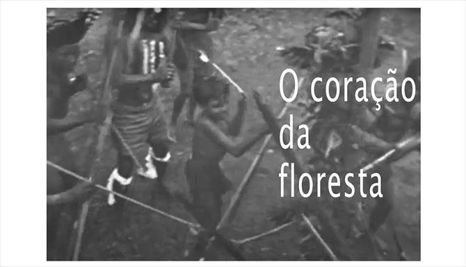 O Coração da Floresta