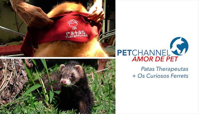 Amor de Pet - Patas Therapeutas + Os Curiosos Ferrets