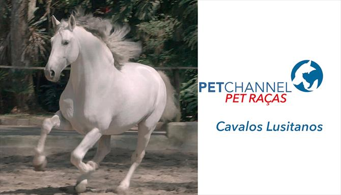 Pet Raças - Cavalos Lusitanos