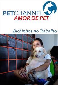 Amor de Pet - Bichinhos no Trabalho
