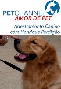 Amor de Pet - Adestramento Canino com Henrique Perdigão