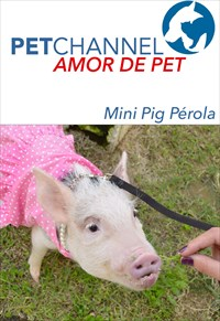 Amor de Pet - Mini Pig Pérola