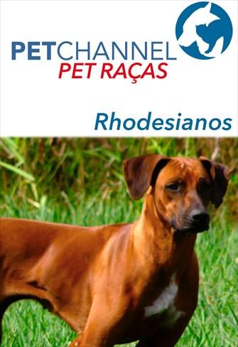 Pet Raças - Cães Rhodesianos