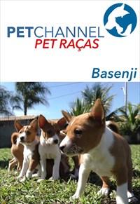 Pet Raças - Cães Basenji