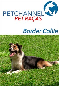 Pet Raças - Cães Border Collie