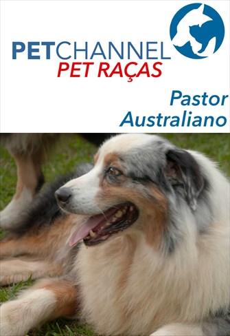 Pet Raças - Pastor Australiano