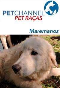 Pet Raças - Cães Maremanos