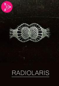 Radiolaris